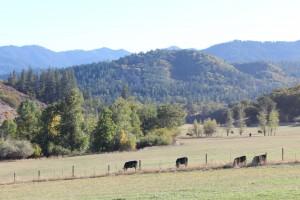 Colestin Valley 2013 14